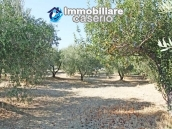 Country house with land in Montenero di Bisaccia 20