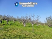 Country house for sale with land in Montenero di Bisaccia, Campobasso, Molise 17