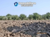 Detached house for sale with land in the country of Montenero di Bisaccia 11