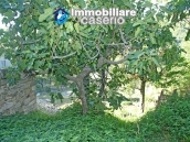 Habitable town house with garden for sale in Castelbottaccio, Molise 4