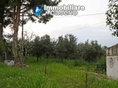 Indipendent rustic cottage sea view  for sale in Abruzzo  6