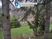 Country house with olive trees for sale near Campobasso, Molise 29