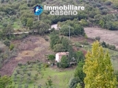Country house with olive trees for sale near Campobasso, Molise 3