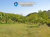 Country house with land and fruit trees for sale near the sea, Abruzzo 23