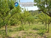 Country house with land and fruit trees for sale near the sea, Abruzzo 24