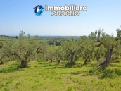 Rustic cottage sea view with land and fruit trees for sale in Abruzzo 5