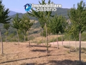 Land with cherry wood trees for sale in Palmoli, Abruzzo 1