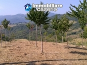 Land with cherry wood trees for sale in Palmoli, Abruzzo 2