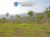Land with cherry wood trees for sale in Palmoli, Abruzzo 3