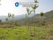 Land with cherry wood trees for sale in Palmoli, Abruzzo 4
