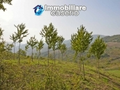 Land with cherry wood trees for sale in Palmoli, Abruzzo 5