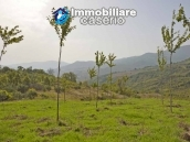 Land with cherry wood trees for sale in Palmoli, Abruzzo 6