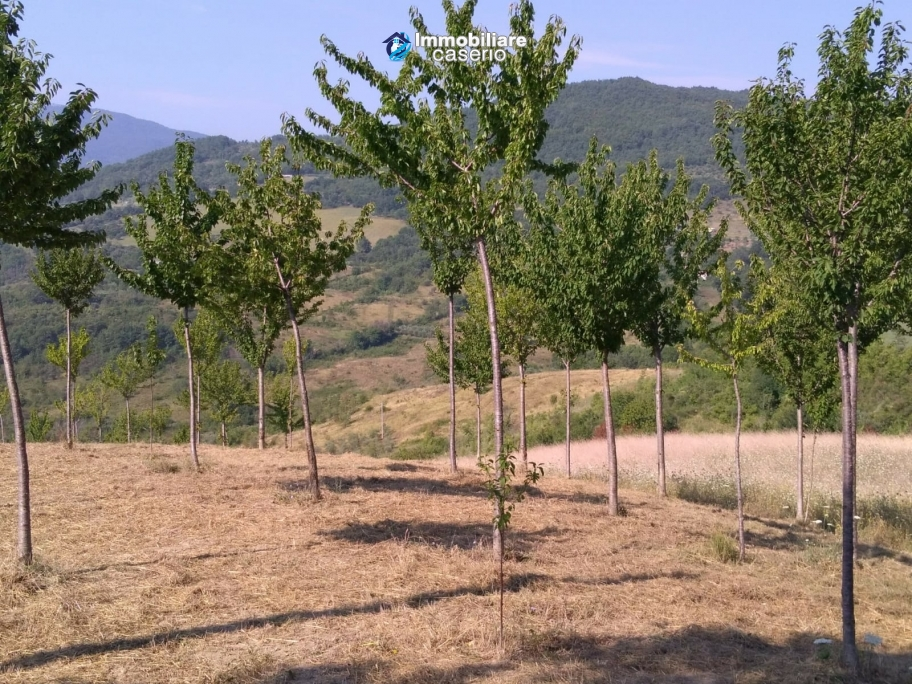 Land with cherry wood trees for sale in Palmoli, Abruzzo