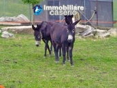 Amazing accommodation property for sale, ready for business in Molise 38