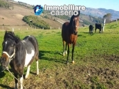 Amazing accommodation property for sale, ready for business in Molise 43