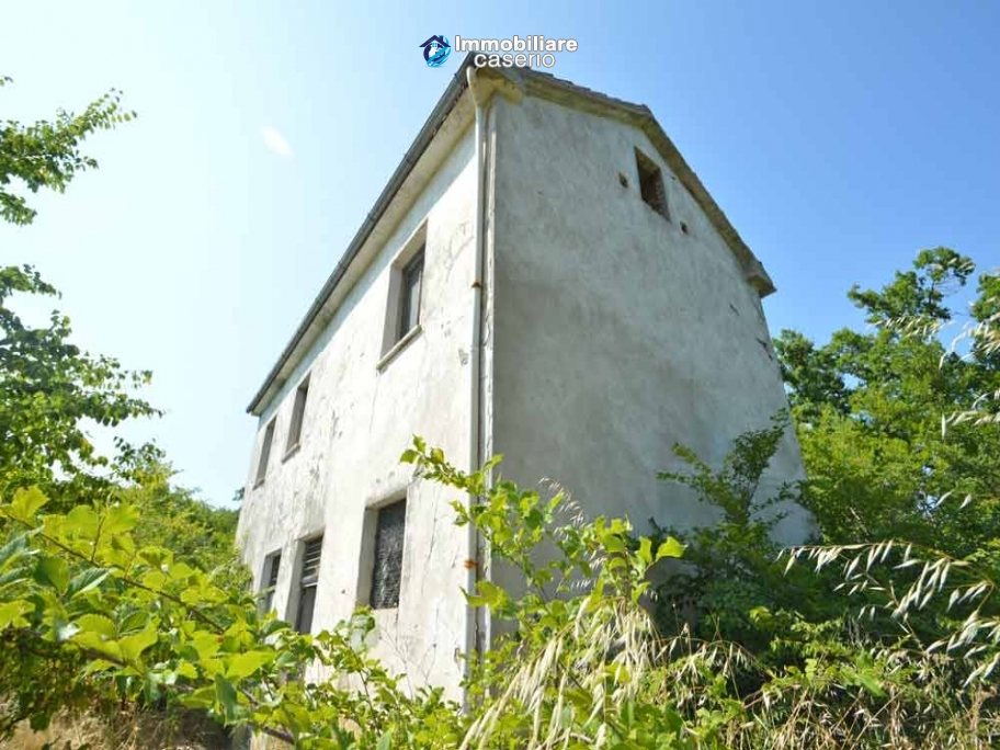 Ancient farmhouse with olive trees for sale near the for Olive trees for sale
