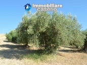 Farm house with 2 hectares of land with sea view for sale in Mafalda 12