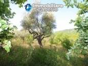 Stone cottage with well and hectares for sale in Abruzzo 10