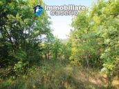 Stone cottage with well and hectares for sale in Abruzzo 11