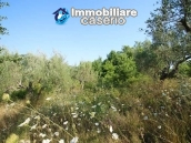 Stone cottage with well and hectares for sale in Abruzzo 16
