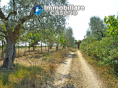 House with sea view, olive trees for sale near Nature Reserve of Punta Aderci. 10