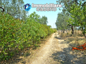 House with sea view, olive trees for sale near Nature Reserve of Punta Aderci. 11