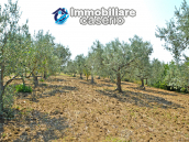 House with sea view, olive trees for sale near Nature Reserve of Punta Aderci. 12