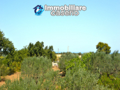 House with sea view, olive trees for sale near Nature Reserve of Punta Aderci. 26