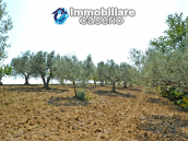 House with sea view, olive trees for sale near Nature Reserve of Punta Aderci. 8