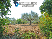 House with sea view, olive trees for sale near Nature Reserve of Punta Aderci. 9