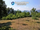 Land with walnut trees for sale in Palmoli, not far from the sea, Abruzzo 6