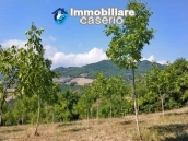 Land with walnut trees for sale in Palmoli, not far from the sea, Abruzzo 7