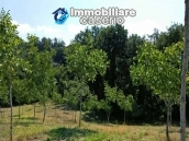Land with walnut trees for sale in Palmoli, not far from the sea, Abruzzo 8