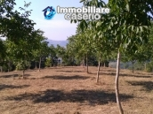 Land with walnut trees for sale in Palmoli, not far from the sea, Abruzzo 3