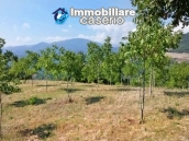 Land with walnut trees for sale in Palmoli, not far from the sea, Abruzzo 5