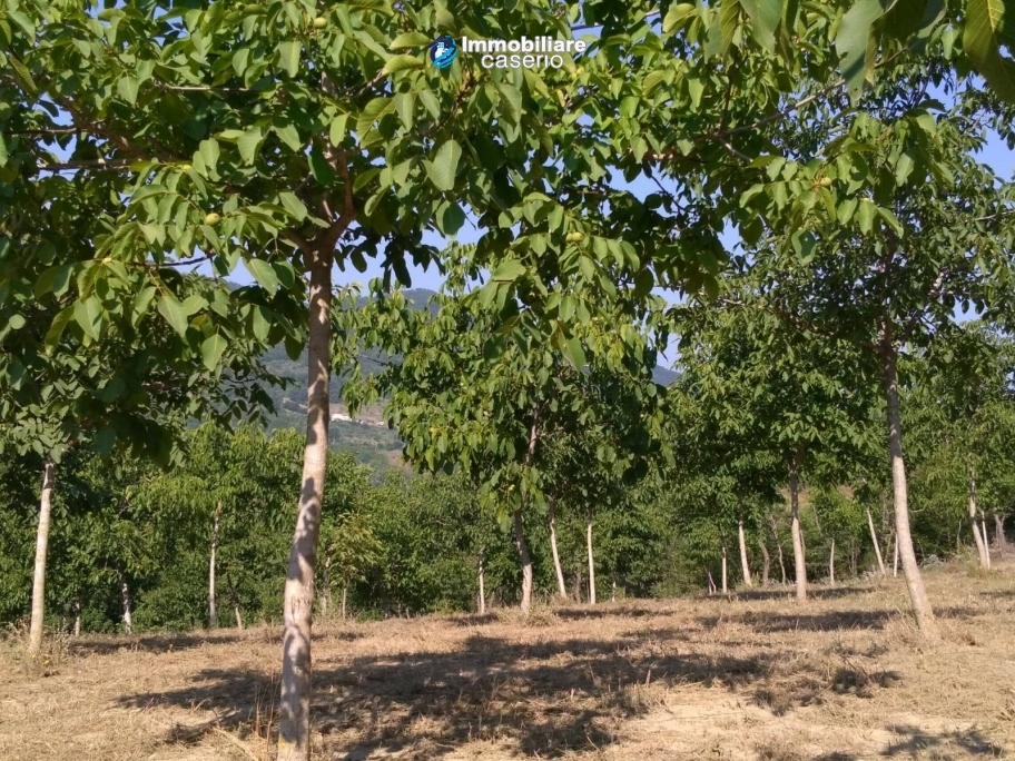 Land with walnut trees for sale in Palmoli, not far from the sea, Abruzzo