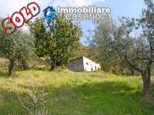House with olive trees for sale in the Province of Chieti, Region Abruzzo 1