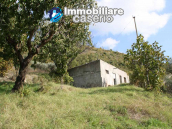 House with olive trees for sale in the Province of Chieti, Region Abruzzo 3