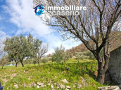 House with olive trees for sale in the Province of Chieti, Region Abruzzo 4