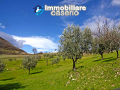 House with olive trees for sale in the Province of Chieti, Region Abruzzo 5