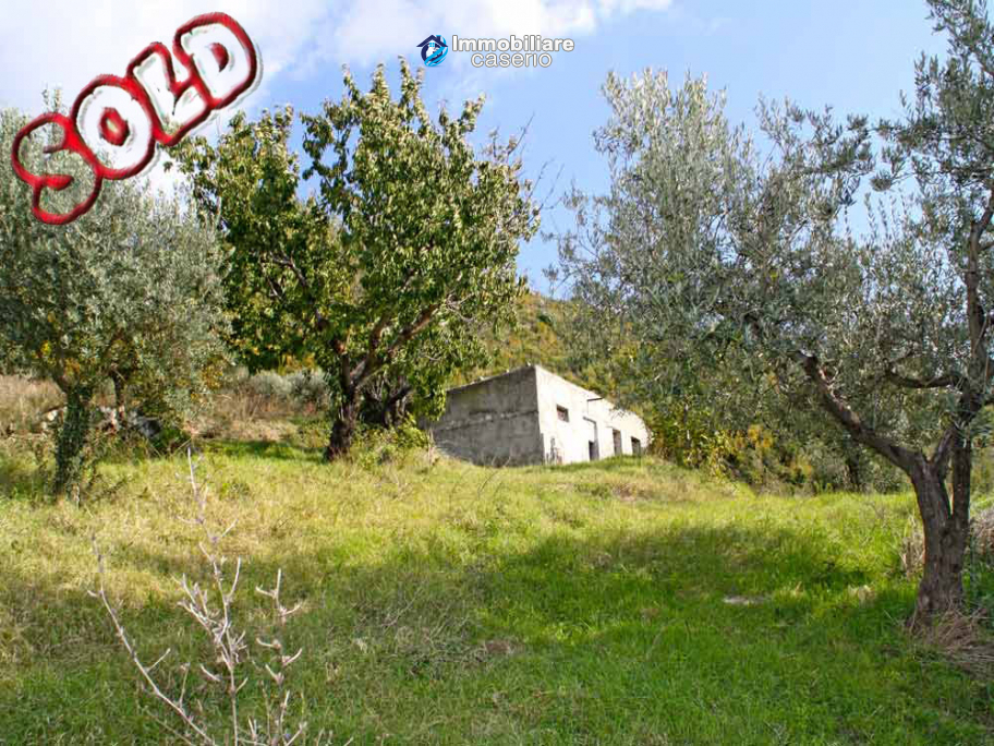 House with olive trees for sale in the Province of Chieti, Region Abruzzo