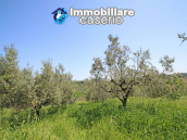 Cottage with sea view and flat land of about 2 hectares for sale in Abruzzo 14