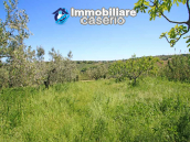 Cottage with sea view and flat land of about 2 hectares for sale in Abruzzo 22