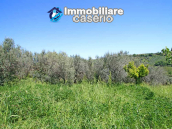 Cottage with sea view and flat land of about 2 hectares for sale in Abruzzo 23