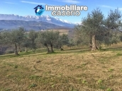Independent house with land and olive trees for sale in the Province of Teramo 11