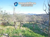 House with garden for sale in Tornareccio, a town called the Queen of Honey 38