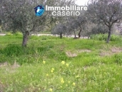 Plot of land with olive grove in Gissi, Abruzzo 1