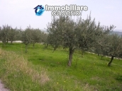 Plot of land with olive grove in Gissi, Abruzzo 2