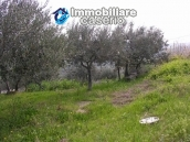 Plot of land with olive grove in Gissi, Abruzzo 3