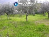 Plot of land with olive grove in Gissi, Abruzzo 4